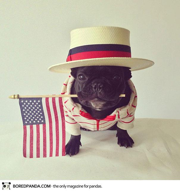 trotter-french-bulldog-11