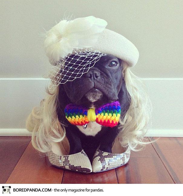 trotter-french-bulldog-12