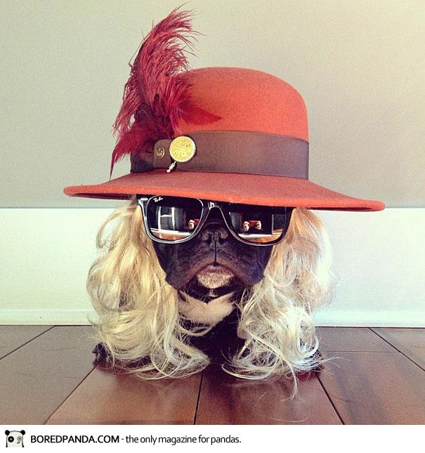 trotter-french-bulldog-14