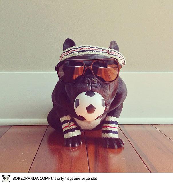 trotter-french-bulldog-3