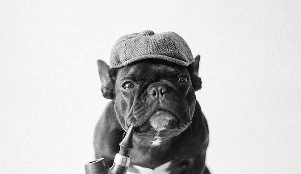 Celebrity Bulldog